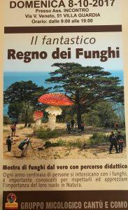 Il fantastico regno dei funghi